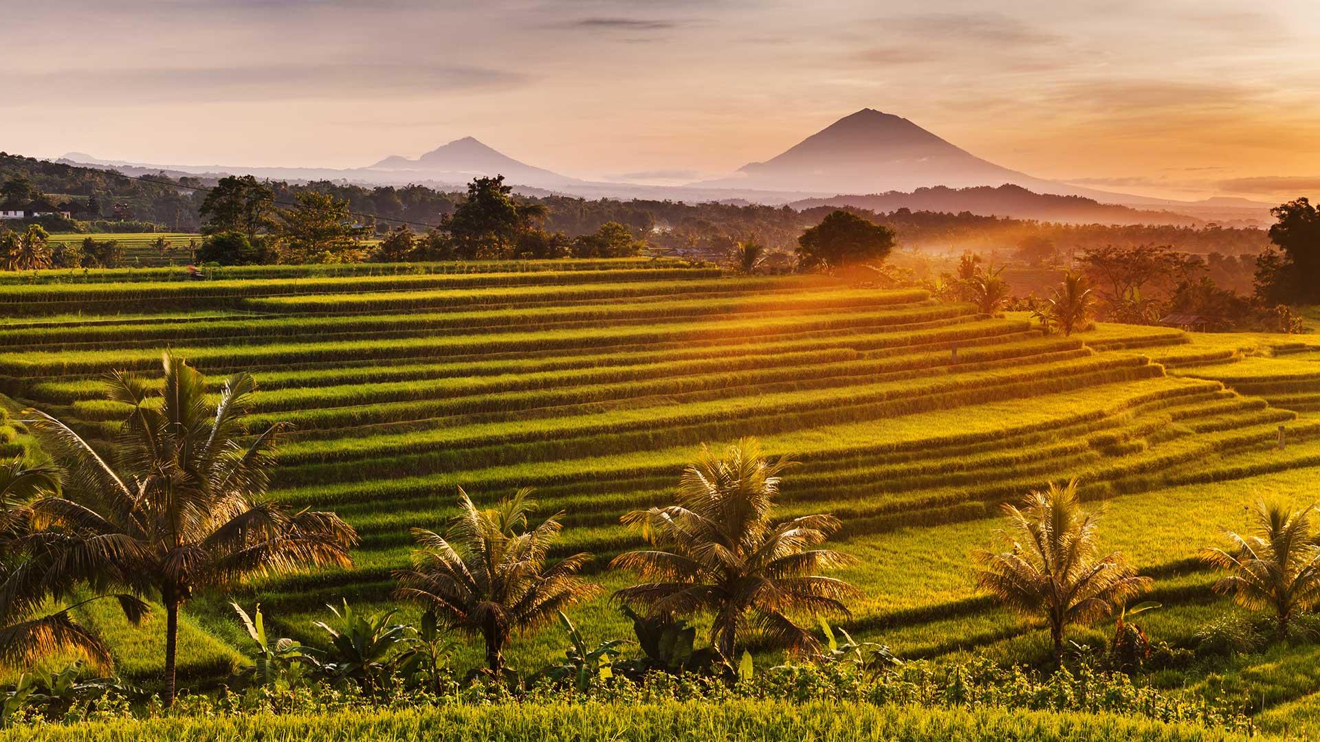 Bali Quiz